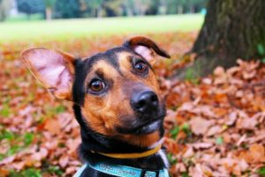 Basisverzorging van je hond